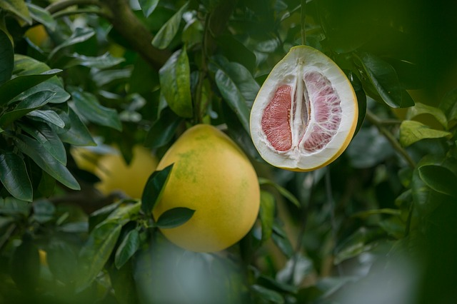 plody pomela